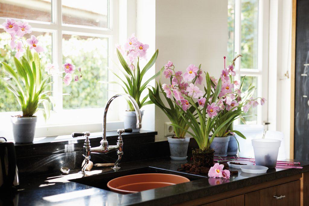 цветы в рабочей зоне